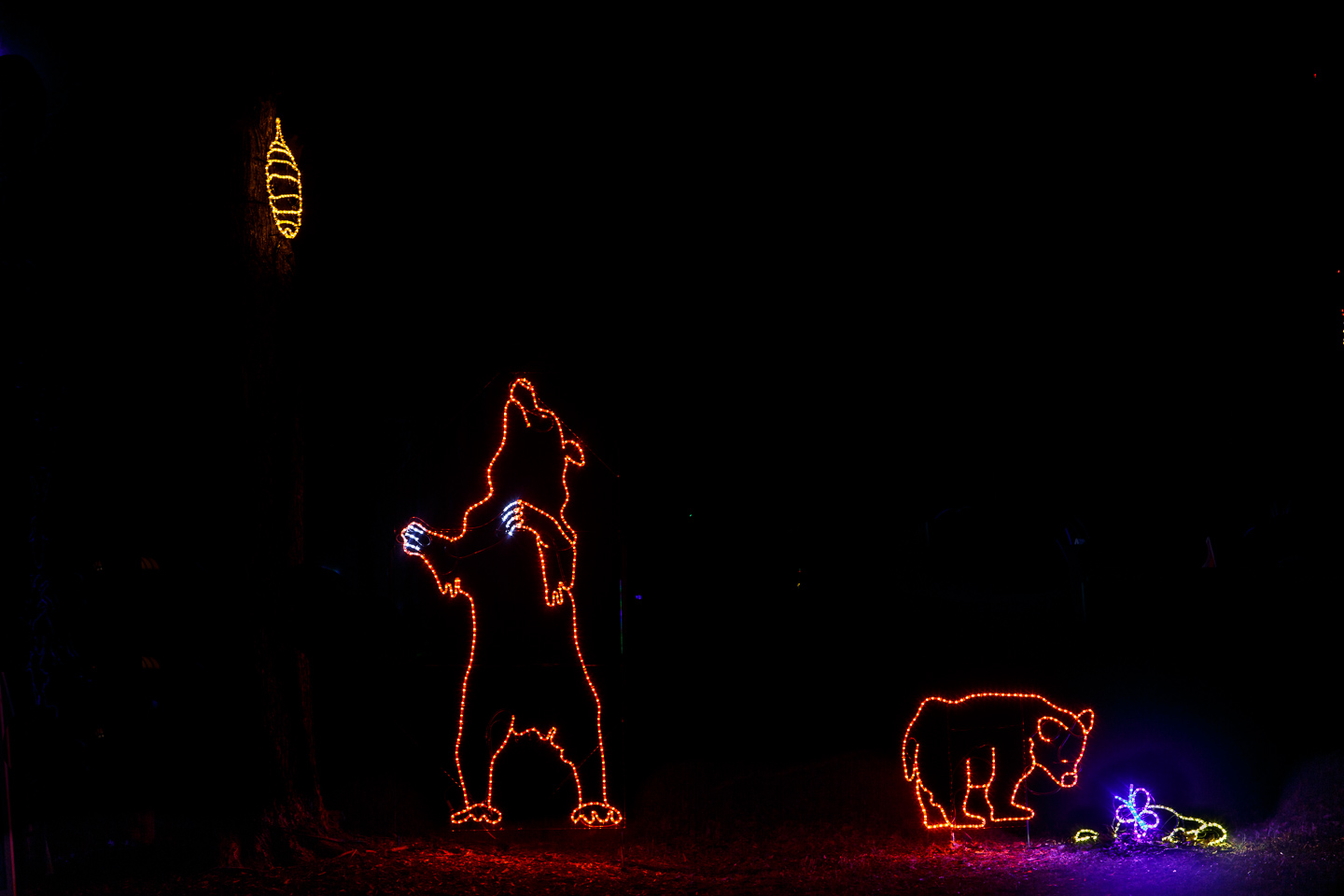 Christmas, lights, bears, honey, night, cold, Meadowlark, park, Fairfax, county, Virginia,